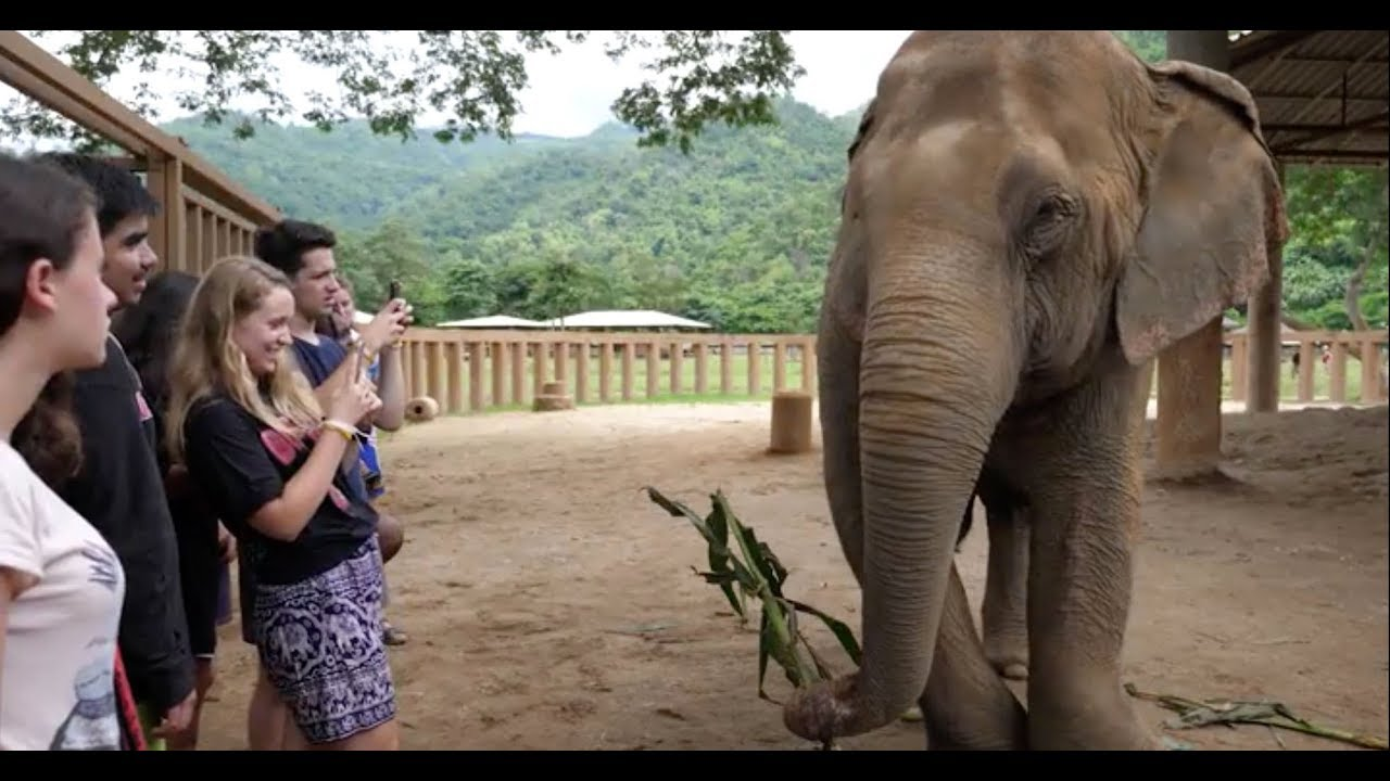The Experiment in Thailand: Visiting Elephants
